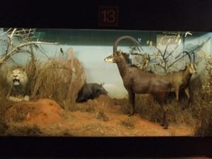 muzeul africii centrale9