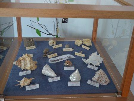 muzeul natura vaii teleajenului 1