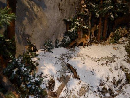 muzeul natura vaii teleajenului 4