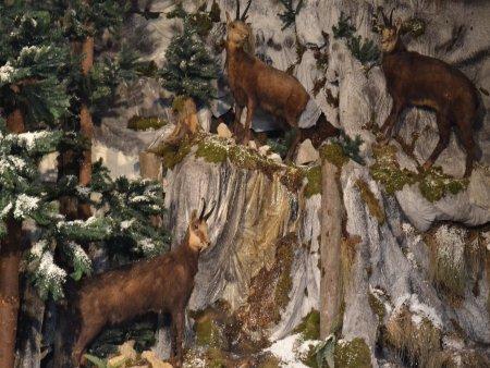 muzeul natura vaii teleajenului 5