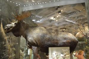 Muzeul de Stiinte Naturale Stockholm10
