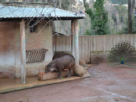 Gradina Zoologica din Roma 2