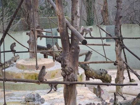 Gradina Zoologica din Roma 3