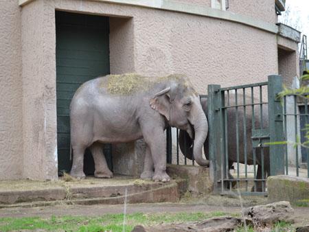 Gradina Zoologica din Roma 4