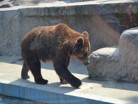 obiective turistice interesante in budapesta zoo 1