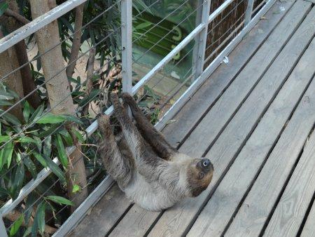obiective turistice interesante in budapesta zoo 3