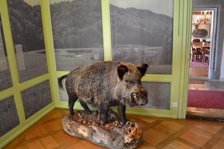 obiective turistice berna castelul landshut 2