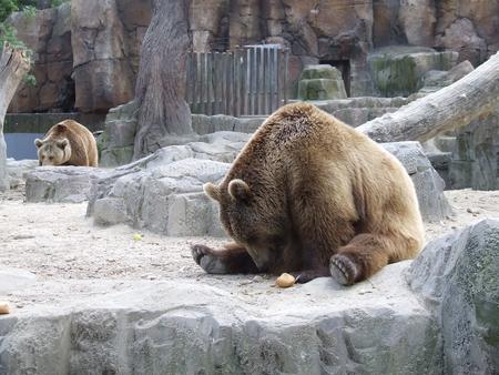 10 obiective turistice din madrid gradina zoo