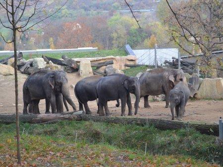 zoo 1 Vacanta la Praga in 5 zile