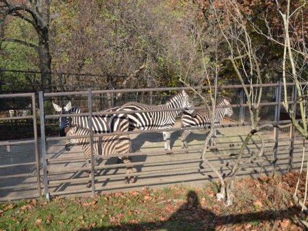 zoo 4 Vacanta la Praga in 5 zile