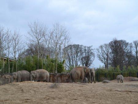 zoo dublin 1 atractii turistice de top in dublin