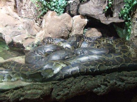 aquarium 2 city break la viena