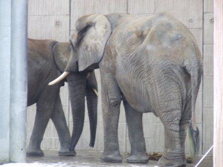 zoo 2 city break la viena